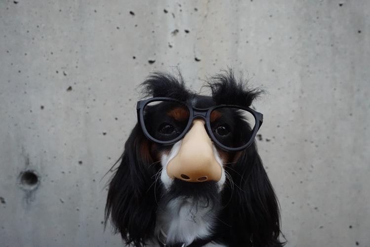 dog wearing groucho marx glasses