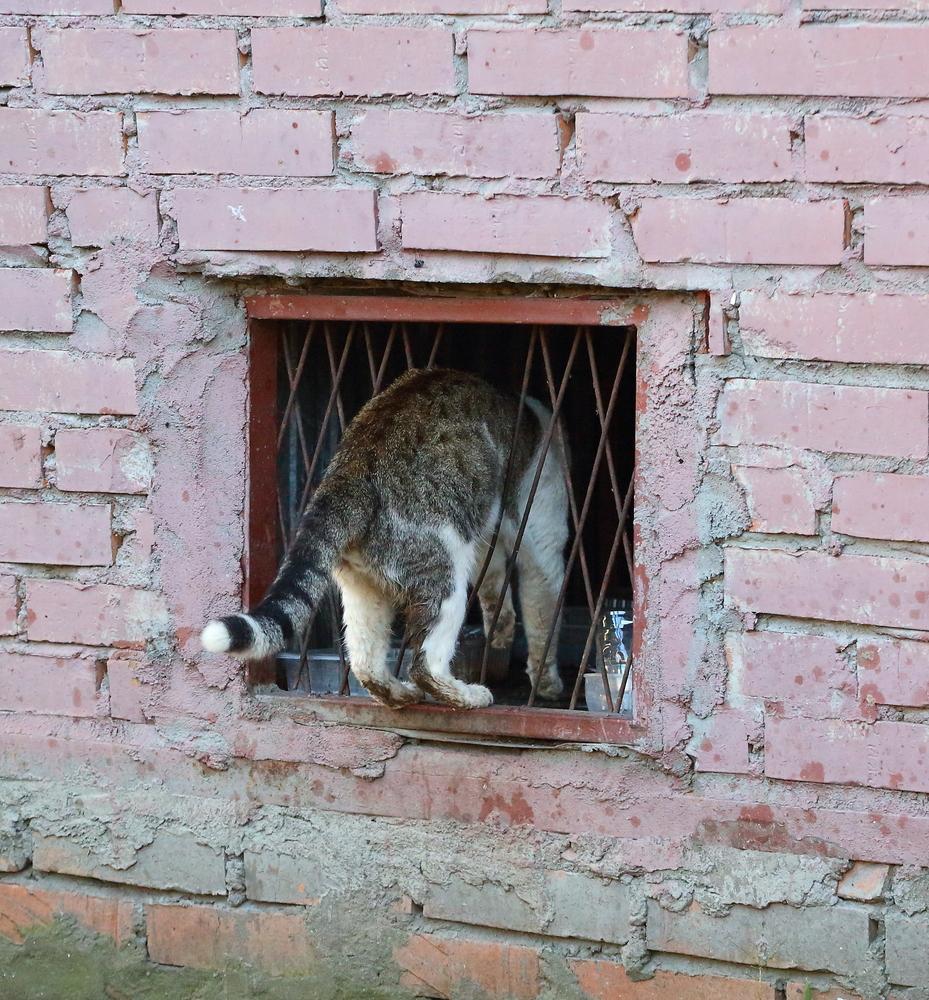 cat crawling through window