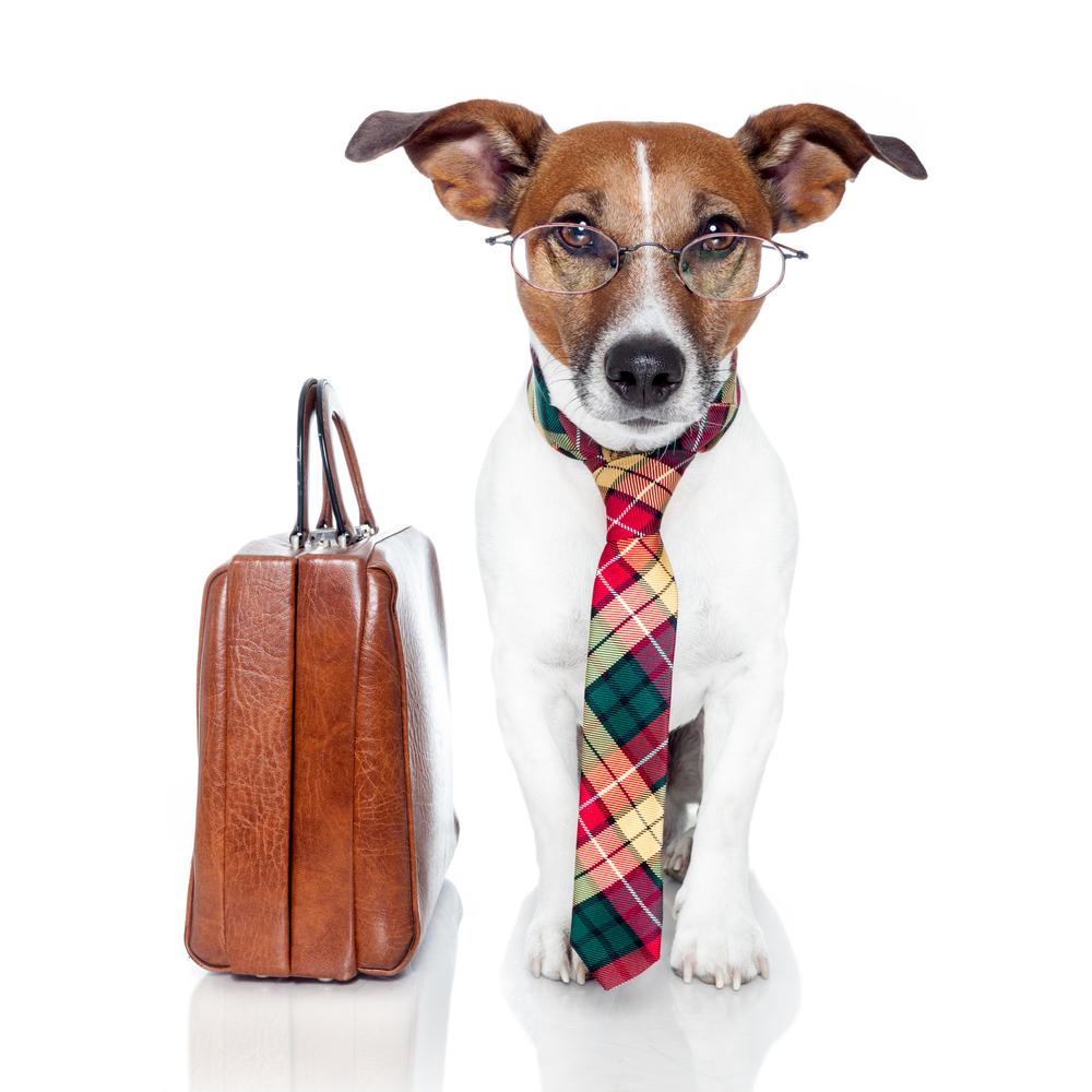 lawyer dog with tie