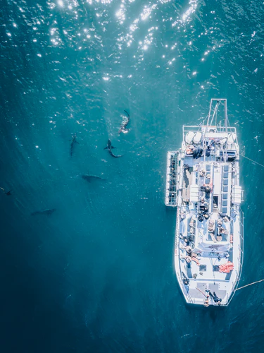 Boat with several sharks