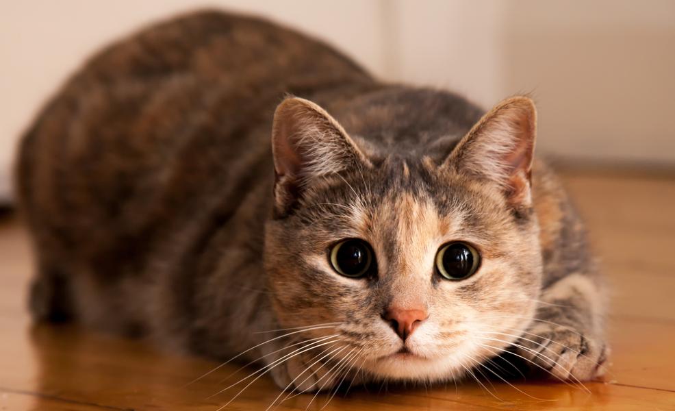 american netflix in uk cat pounce