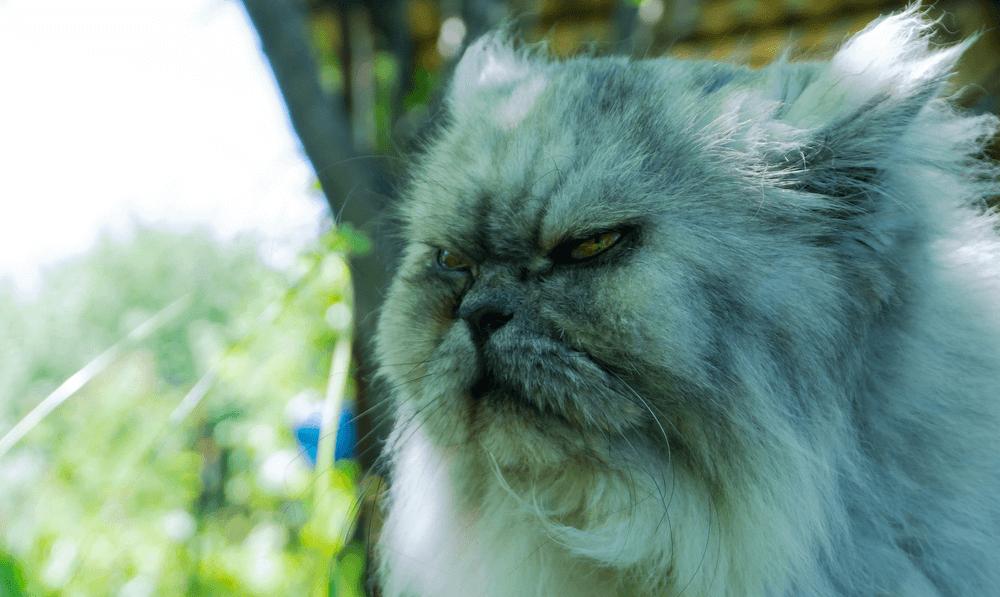 best vpns grumpy cat